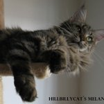 Hillbilly Cats Melanite