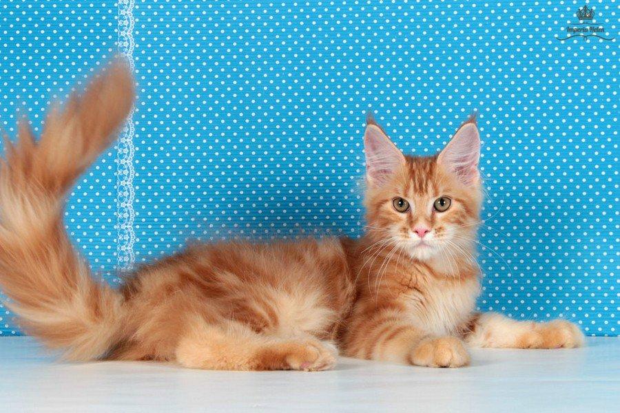 К чему рыжие коты к богатству